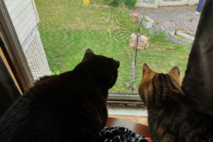 Tony and Charlie (cats) look out a window